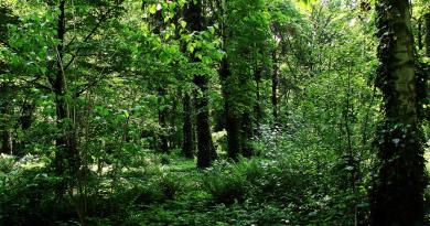 park maj 2008_mniejszy