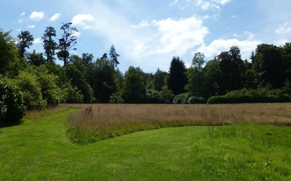 Niekoszona łąka z traw zestawiona z koszonym trawnikiem. Fot. Małgorzata Piszczek